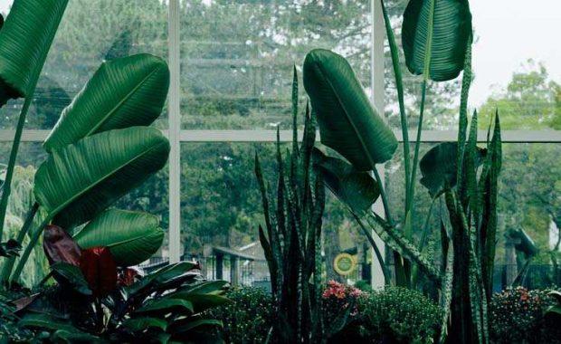 starting a garden, how to start a successful, gardening, gardening tips, steps for starting garden